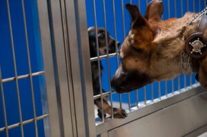 Animal shelter as a part of non profit organization